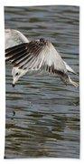 Seagull Dive Beach Towel