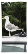 Seagull On Car Beach Towel
