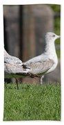 Seagull Opposites Beach Towel