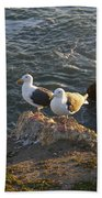 Seagulls Aka Pismo Poopers Beach Towel