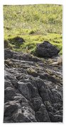 Seal - Montague Island - Austrlalia Beach Towel