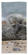 Seal Pup On Beach Beach Towel
