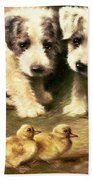 Sealyham Puppies And Ducklings Beach Towel