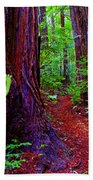 Searching For Friends Among The Redwoods Beach Towel