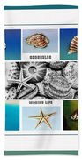 Seashell Collection 3 - Collage Beach Towel