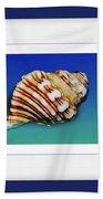Seashell Wall Art 1 - Blue Frame Beach Towel