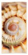Seashell Wall Art 11 - Spiral Of Harpa Ventricosa Beach Towel