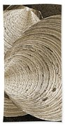 Seashells Spectacular No 11 Beach Towel