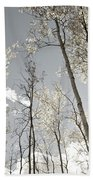 Silver Birch  Beach Towel