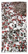 Secluded Winter Haven Beach Towel
