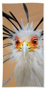 Secretary Bird Portrait Close-up Head Shot Beach Towel by Johan Swanepoel