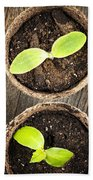Seedlings Growing In Peat Moss Pots Beach Towel