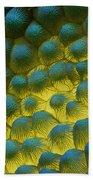 Sem Of Rapeseed Flower Beach Towel