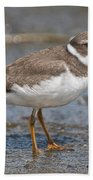 Semi-palmated Plover Pictures 59 Beach Towel