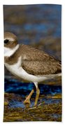 Semipalmated Plover Beach Towel