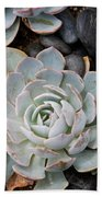 Sempervivum Beach Towel