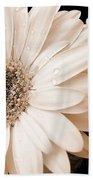 Sepia Gerber Daisy Flowers Beach Towel by Jennie Marie Schell