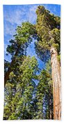 Sequoias Reaching To The Clouds In Mariposa Grove In Yosemite National Park-california Beach Towel