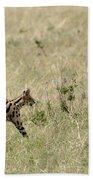 Serval Hunting Beach Towel