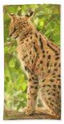 Serval Leptailurus Serval Beach Towel