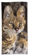 Serval Portrait Wildlife Rescue Beach Towel