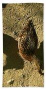 Shadows Of A Mallard Duck Beach Towel