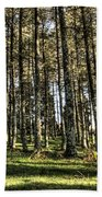 Shadows Of The Larch Forest Sunset No2 Beach Towel