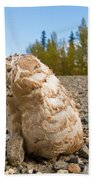 Shaggy Mane Mushroom Grows Through Gravel Surface Beach Towel