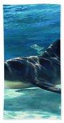 Shark In Depth Beach Towel