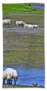 Sheep In Branch-nl Beach Towel