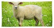 Sheep In Summer Meadow Beach Towel