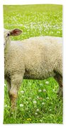 Sheep In Summer Meadow Beach Towel