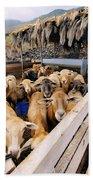 Sheeps Enclosure Beach Towel