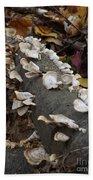 Shelf Mushrooms In Autumn Beach Towel