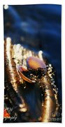 Shell By The River Beach Towel