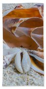 Shell Collectors Dream Beach Towel