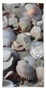 Shells On Treasure Island Beach Towel by Carol Groenen
