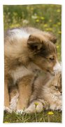 Sheltie Puppy And Persian Cat Beach Towel