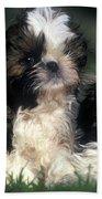Shih Tzu Puppy Dogs Beach Towel