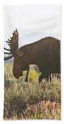 Shiras Bull Moose Beach Towel