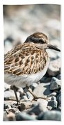 Shorebird Beauty Beach Towel