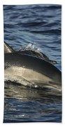 Short-beaked Common Dolphin Sea Beach Towel