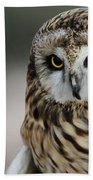 Short Eared Owl Portrait Beach Towel