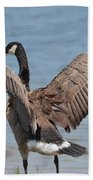 Show Of Feathers Beach Towel