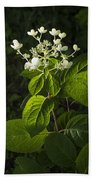 Shrub With White Blossoms Beach Towel
