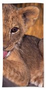 Shy African Lion Cub Wildlife Rescue Beach Towel