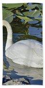 Shy Swan Beach Towel