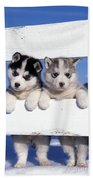 Siberian Husky Puppies Beach Towel