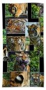 Siberian Tiger Collage Beach Towel