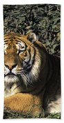 Siberian Tiger Endangered Species Wildlife Rescue Beach Towel
